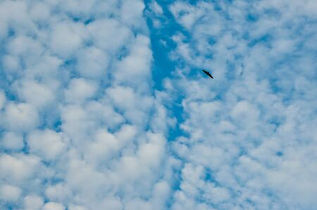 chilika: A Bird in the dramatic sky and clouds in Chilika, India