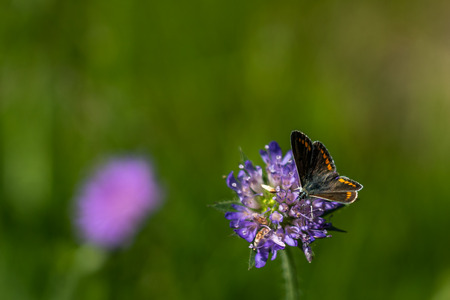 close up of a butterfly on a flower in saxon switzerland, germany