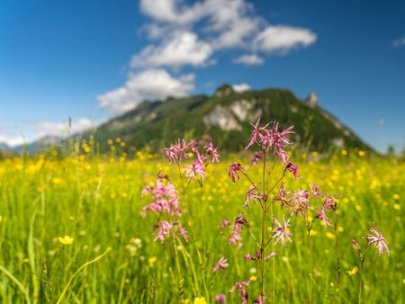 voew on wetland and mountain panorama in ettaler weidmoos, ammergauer alps, germany