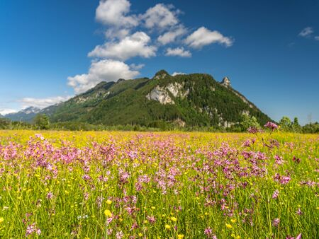 Voew auf Feuchtgebiet und Bergpanorama in Ettaler Weidmoos, Ammergauer Alpen, Deutschland