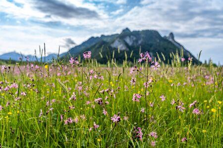 Voew auf Feuchtgebiet und Bergpanorama in Ettaler Weidmoos, Ammergauer Alpen, Deutschland Standard-Bild