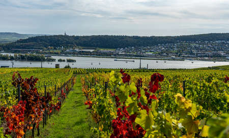 View on vineyards, rhine during fall in ruedesheim, middle rhine valley, germany