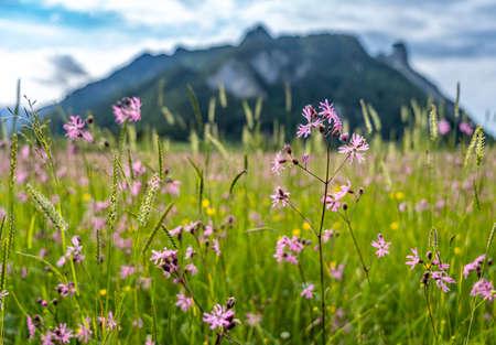 voew on wetland and mountain panorama in ettaler weidmoos, ammergauer alps, germany Standard-Bild