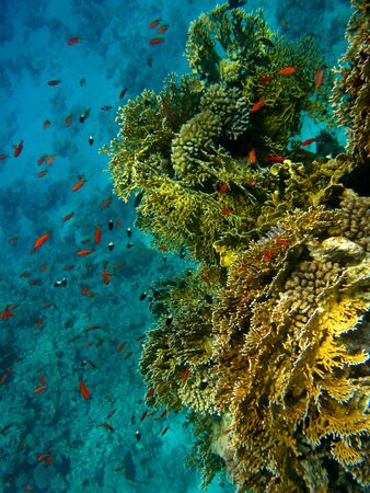 The marvelous sea bottom of Sharm El Sheik and its thriving fish life Stock Photo
