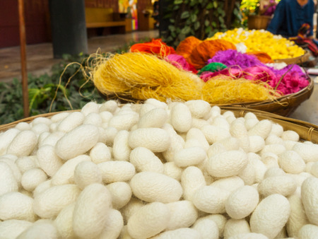 cocoons: Silkworm cocoons, Thailand