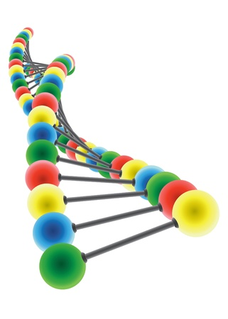 DNA model on the white background Vector