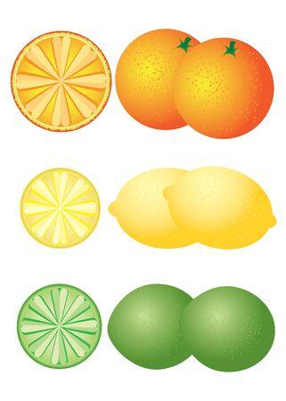 set of citrus fruits on the white background. Orange, lemon, lime. Stock Vector - 10073242