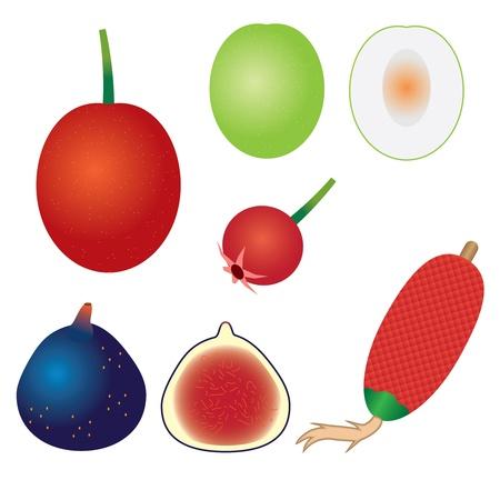 jujube fruits: Set of exotic fruits on the white background. Ximenia, jujube, ugni molinae, fig, ita palm.
