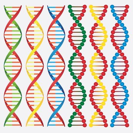 csigavonal: Állítsa az absztrakt képek a DNS-molekulák a fehér háttér.