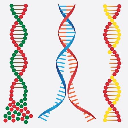 cadena rota: Im�genes abstractas de las cadenas de ADN rotas en el fondo blanco. Vectores
