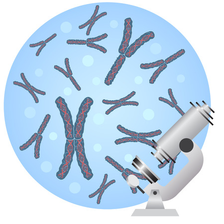 human chromosomes: Image of microscope and chromosomes on the white background.