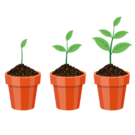flower of life: Plants Growing in the pot, from small to big.