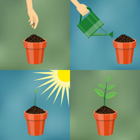 How to grow tree from the seed in the pot easy step by step. Design of garden elements. Illustration