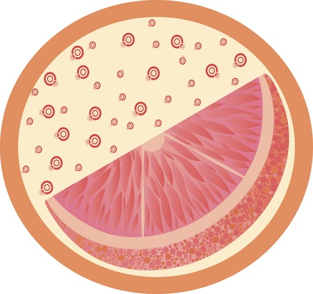 Red grapefruits  Vector