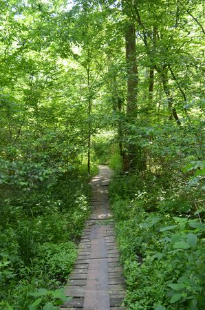 boardwalk trail: Forest Boardwalk Trail