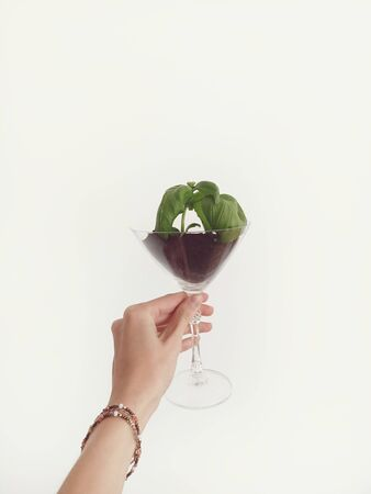 Green basil in glass. Hand holding it on white wall background. 版權商用圖片
