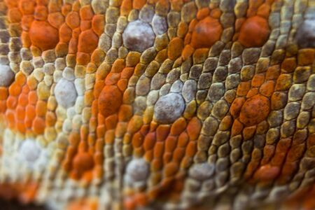Closeup Gecko Scales