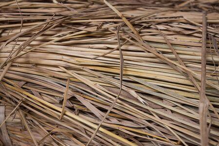 Close up of straw Stock Photo