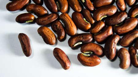 Beans seed Macro