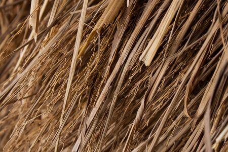 Close up Straw