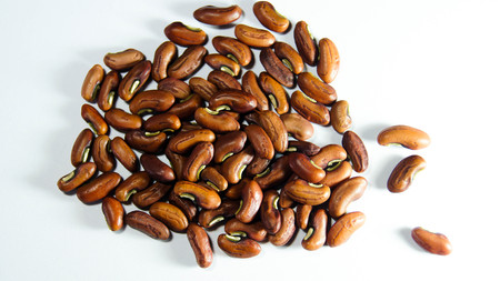 Beans seed Stock Photo