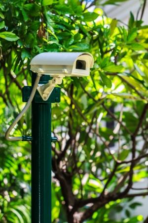 Security Camera in the Garden, CCTV Camera