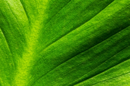 super macro: Abstract of Green Leaf Surface Stock Photo