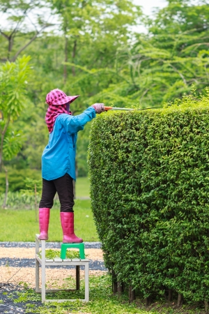 Professional gardener pruning an hedge in Tropical Park Stock Photo