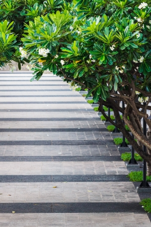Walkway in the Park covered by Plumeria Tree