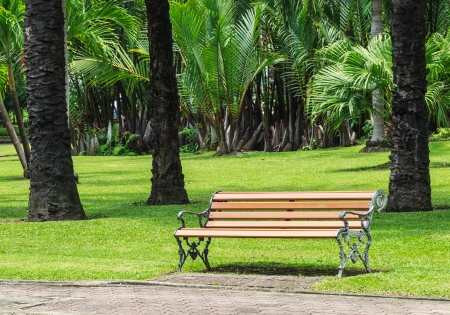Wood Bench with Alloy Structure in Palm Garden, Summertime photo