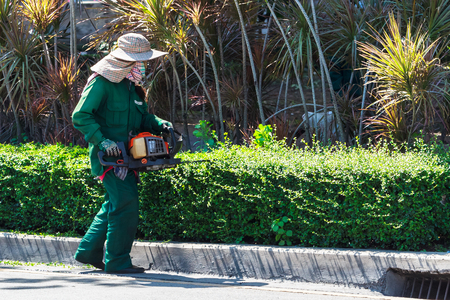 A Woman Trimming Hedge with Trimmer Machine photo