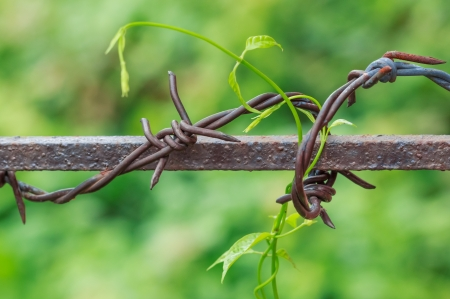 Barbed Wire in Nature Blurred Background photo