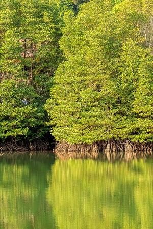 Mangrove Forest in Koh Chang, Chantaburi, Thailand