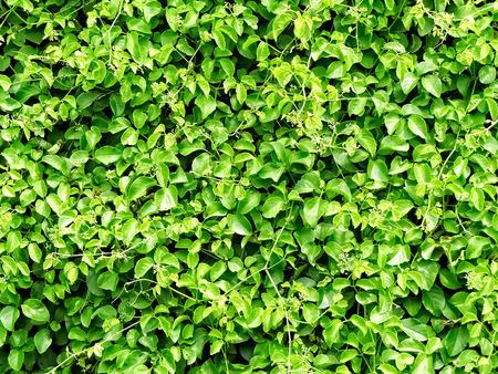 Green Leavf Background Stock Photo