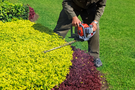 trimmer: A man trimming shrub with Hedge Trimmer Stock Photo
