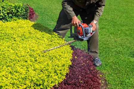 Een man trimmen struik met heggenschaar Stockfoto