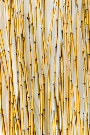 interiors: Bamboo Background for Interiors Design, Vertical Pattern
