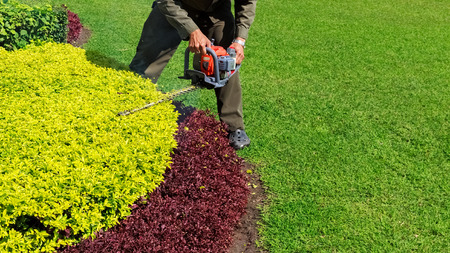 trimmer: A man trimming shrub with Hedge Trimmer, Green grass copyspace
