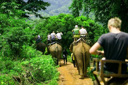 Tourist group rides through the jungle on the backs of elephants