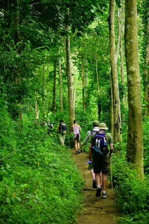 Group of trekkers hike through lush green jungle photo