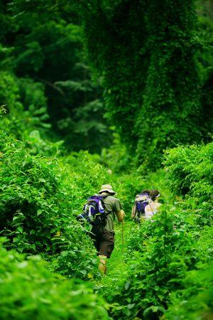 Grupo de excursionistas caminata a trav�s de una exuberante selva verde