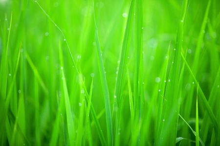 Early morning dew on grass - abstract background Stock Photo - 3083991