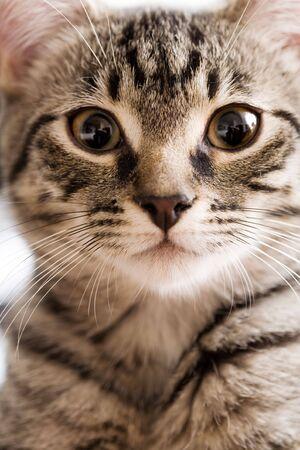 Portrait of household Tabby Cat Stock Photo - 2966726