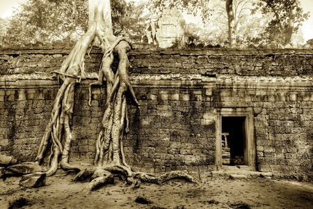 antique: Giant Strangler Fig grows over temple wall LANG_EVOIMAGES