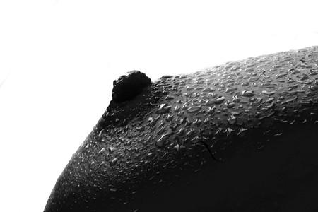 wet nude: An�nimo h�medo desnudos sobre fondo blanco