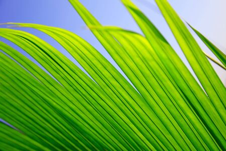 Abstract nature background, green palm leaves Stock Photo - 7019444