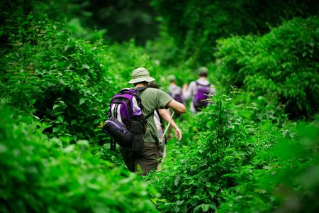 Group of trekkers hiking through lush jungle