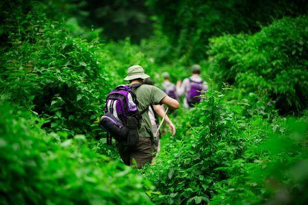 Group of trekkers hiking through lush jungle photo