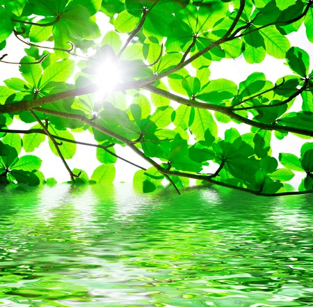 backlit: Abstract background of backlit green leaves with water reflections
