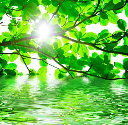 backlit: Fondo abstracto de contraluz verde deja con reflejos de agua